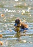 Deutschlands Wasservögel (Wandkalender 2018 DIN A4 hoch) Dieser erfolgreiche Kalender wurde dieses Jahr mit gleichen Bildern und aktualisiertem Kalendarium wiederveröffentlicht.