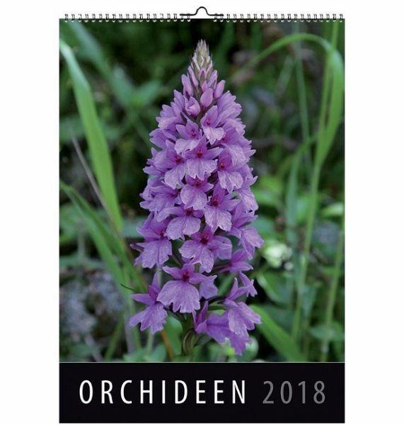 orchideen 2018. Black Bedroom Furniture Sets. Home Design Ideas