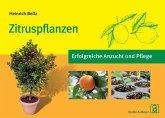 Zitruspflanzen