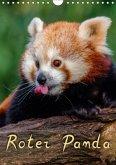 Roter Panda (Wandkalender 2018 DIN A4 hoch)