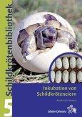 Inkubation von Schildkröteneiern
