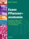 Esaus Pflanzenanatomie (eBook, PDF)