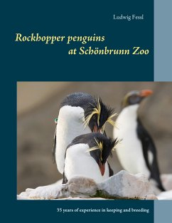 Rockhopper penguins at Schönbrunn Zoo