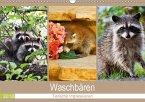 Waschbären 2018. Tierische Impressionen (Wandkalender 2018 DIN A3 quer)