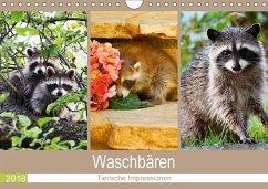 Waschbären 2018. Tierische Impressionen (Wandkalender 2018 DIN A4 quer) - Lehmann, Steffani