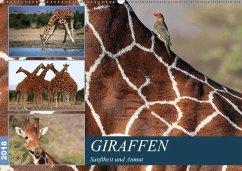 Giraffen - Sanftheit und Anmut (Wandkalender 2018 DIN A2 quer) Dieser erfolgreiche Kalender wurde dieses Jahr mit gleichen Bildern und aktualisiertem Kalendarium wiederveröffentlicht.