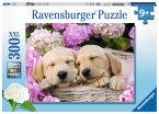 Süße Hunde im Körbchen (Kinderpuzzle)