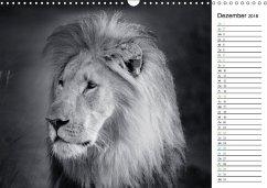 Löwen schwarz weiß (Wandkalender 2018 DIN A3 quer)