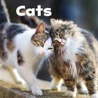 Cats - Amstutz, Lisa J.