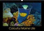 Colourful Marine Life (Wall Calendar 2018 DIN A3 Landscape)