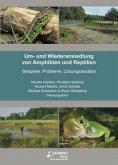Um- und Wiederansiedlung von Amphibien und Reptilien