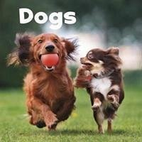 Dogs - Amstutz, Lisa J.