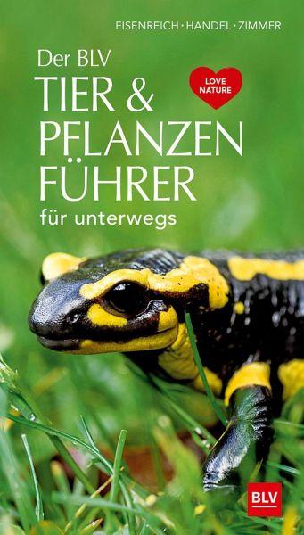 Der BLV Tier & Pflanzenführer - Eisenreich, Wilhelm; Handel, Alfred; Zimmer, Ute E.
