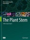 The Plant Stem