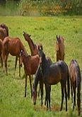 Brieko übernimmt die wilde Pferde (eBook, ePUB)