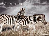 2019 Wildlife Poster Calendar