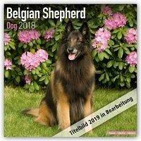 Belgian Shepherd Dog - Belgischer Schäferhund 2019