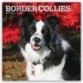 Border Collies 2019 - 18-Monatskalender mit freier DogDays-App
