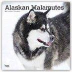 Alaskan Malamutes 2019 - 18-Monatskalender mit freier DogDays-App