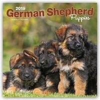 German Shepherd Puppies - Deutsche Schäferhunde...