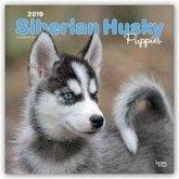 Siberian Husky Puppies - Husky-Welpen 2019 - 18-Monatskalender mit freier DogDays-App