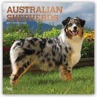 Australian Shepherds - Australische Schäferhund...