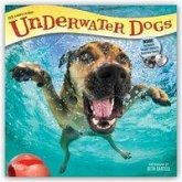 Underwater Dogs 2019 Square Wall Calendar