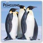 Penguins - Pinguine 2019 - 18-Monatskalender