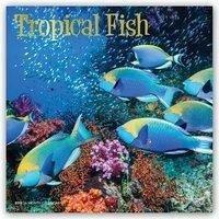 Tropical Fish - Tropische Fische 2019 - 18-Monatskalender