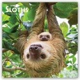 Sloths - Faultiere 2019 - 18-Monatskalender