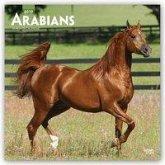 Arabians - Araber - Araber Pferde 2019 - 18-Monatskalender