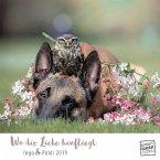 Wo die Liebe hinfliegt 2019 - Schäferhund Ingo & Steinkauz Poldi