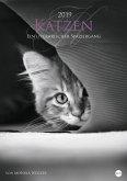 Katzen - Ein literarischer Spaziergang 2019