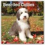 Bearded Collies 2019 - 18-Monatskalender mit freier DogDays-App