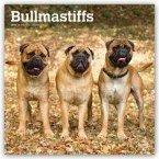 Bullmastiffs 2019 - 18-Monatskalender mit freier DogDays-App