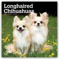 Longhaired Chihuahuas - Langhaar-Chihuahuas 201...