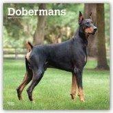 Dobermans - Dobermänner 2019 - 18-Monatskalender mit freier DogDays-App