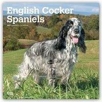 English Cocker Spaniel - Englische Cockerspanie...