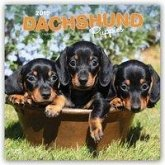 Dachshund Puppies - Dackelwelpen 2019 - 18-Monatskalender mit freier DogDays-App
