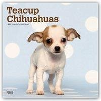 Teacup Chihuahuas 2019 - 18-Monatskalender mit ...