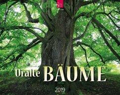 Uralte Bäume 2019