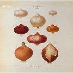 Hagen Rether, Liebe 6 (MP3-Download)
