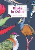 Birds in Color: 50 Postcards