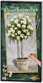 Schipper 609220777 - Malen Nach Zahlen, Rosenbäumchen Weiß