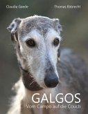 Galgos