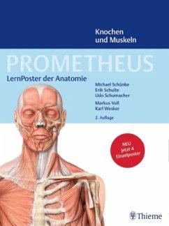 LernPoster der Anatomie, Knochen und Muskeln, 4 Poster / Prometheus - Schünke, Michael; Schulte, Erik; Schumacher, Udo