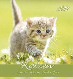 Katzen 2019 Postkartenkalender