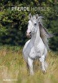 Pferde - Horses 2019