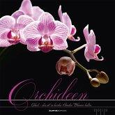 Orchideen 2019