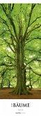 Bäume 2019 Streifenkalender XXL
